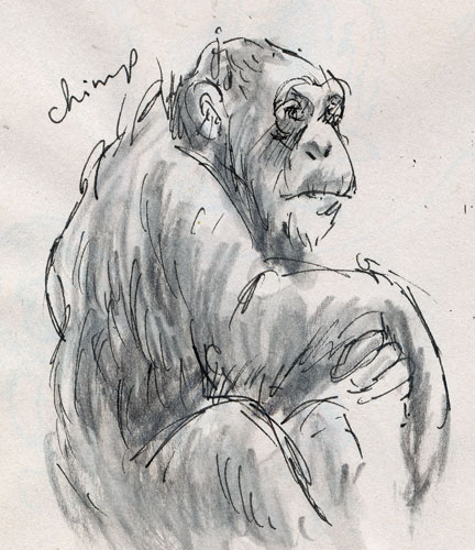 chimp_web