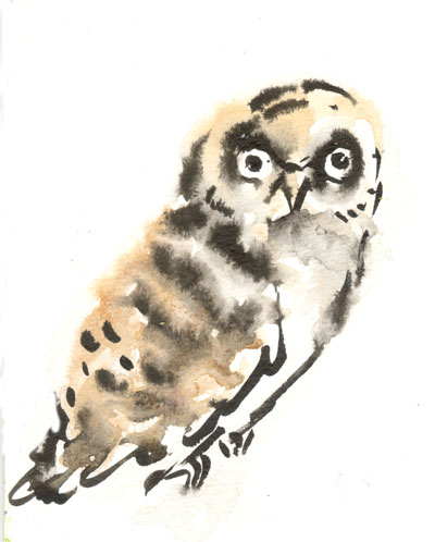owl_watercolour1